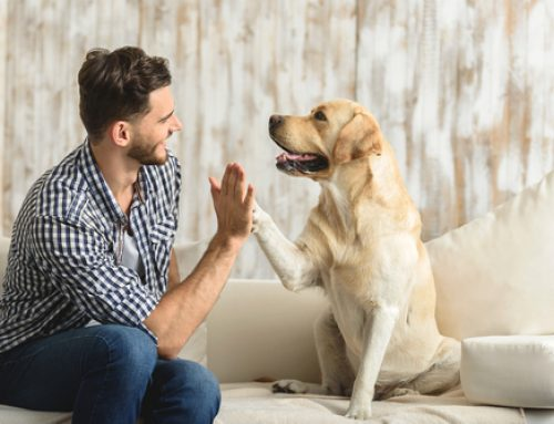 Animais de estimação: cuidados básicos para evitar conflitos e manter a boa convivência