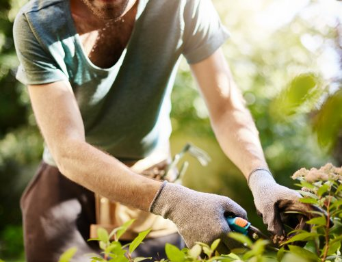 Manutenção de jardins é essencial para os cuidados com condomínio